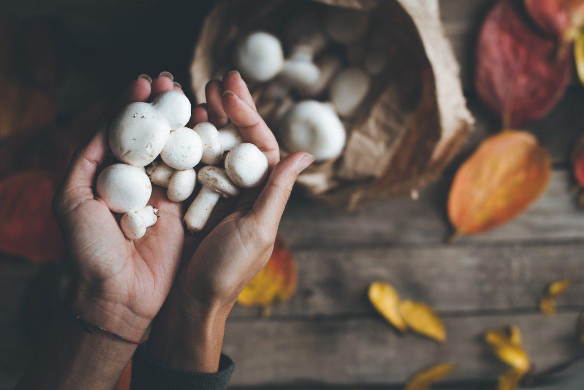 Pilze zu Hause züchten: Tipps & Tricks